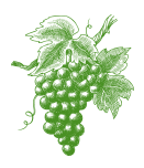 Grape Cluster Drawing